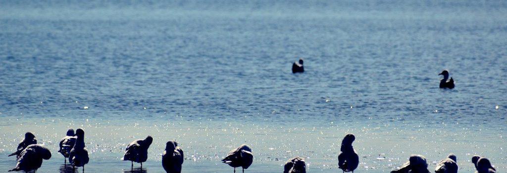 seagulls, coast, birds